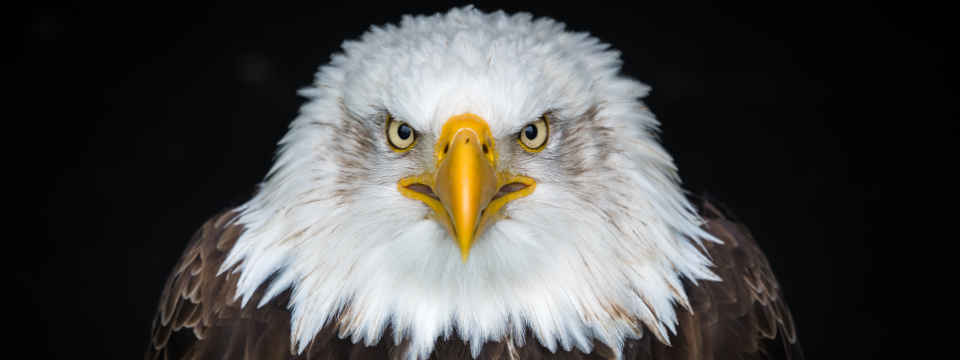 Defend against fake invoices using focus and insight, like this eagle looking directly at you