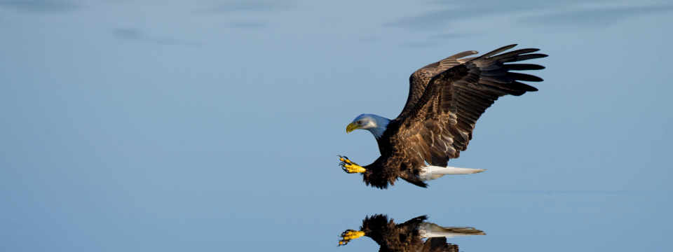 Purchase orders help you hunt out the fraudsters like an eagle